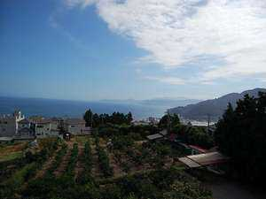 蜜柑の花咲く丘の宿 旅館 幸太荘